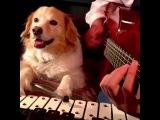 Feel Good Inc. by Gorillaz w Maple on the Glockenspiel