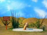 Жираф в зыбучих песках