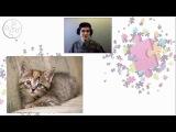 Черты характера, свойственные любителям кошек
