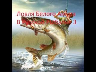 Ловля Белого Амура на Озере в Русской Рыбалке 3
