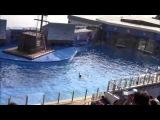 Гонконг Ocean Park Океанический театр Ocean Theatre (Видео Турист)