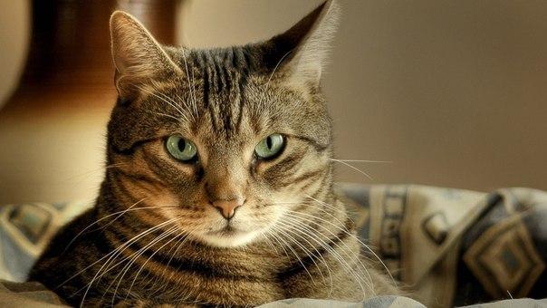 в которых кошка устраивает