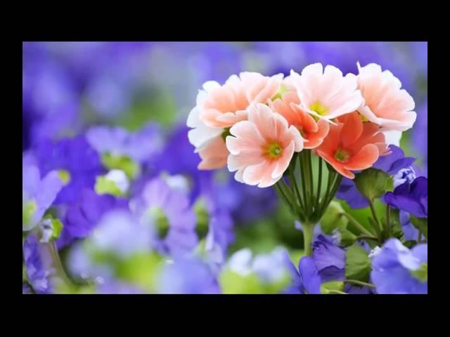 Самые красивые цветы милым женщинам