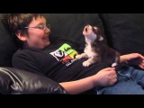 Воющий щенок-хаски стал звездой на YouTube
