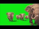 Хромакей,free Chroma Key Effects, Футажи на Зеленом Фоне