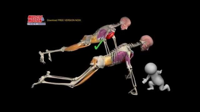 How to do a Proper Push Up: Watch the muscles in 3D learn to avoid a common mistake.