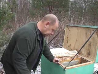 17 ноября отбор мёда у пчёл на улице