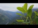 Бесконечные плантации коки Шашлык из морской свинки Боливия Мир Наизнанку 5 с
