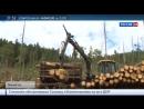 Специальный репортаж - Темный лес