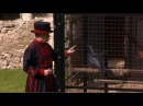 The ravens at the Tower of London: the guardians of the Tower