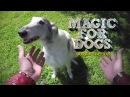 Уличная магия для собак. Где лакомство