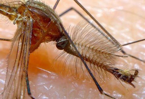 YUBpfj9KxIk - Комары теперь смертельно опасны