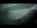 BBC Голубая планета 4 Замёрзшие моря