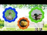 Песенка Домашние животные и их дети.