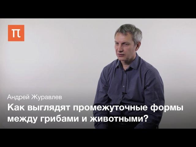Появление первых животных - Андрей Журавлев