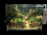 The Art of the Planted Aquarium 2015 - Scaper's Tank (Nano) category, part 4