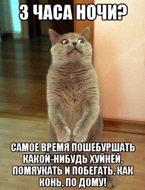 http://cs7066.vk.me/c624929/v624929775/dcc5/Cw2uPcumuRs.jpg