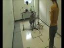 "Duke University Study Finds Stress ""Sweet Spot"" Differs For Mellow Vs. Hyper Dogs"