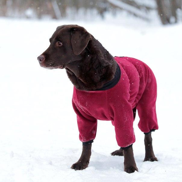 OSSO Fashion - лучшие товары для животных,дрессировки,спорта GLnrzUvejTw