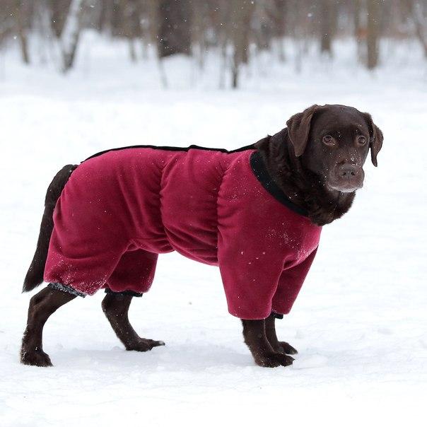 OSSO Fashion - лучшие товары для животных,дрессировки,спорта IzSv2TJvudM