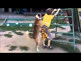 Собаки трахают алкашей=) HD