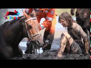 Храбрая девушка отчаянно пытается спасти свою лошадь Настоящая любовь Трогательно