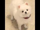 weibo No Min Woo - What R U doing? momo?