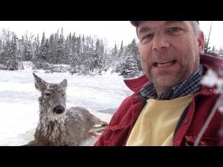 Мисс Льдинка: глухонемой американец спас олениху, провалившуюся под лед