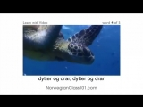 Norsk med video - If This Norwegian Video Lesson Makes You Feel Froggy, Then JUMP!