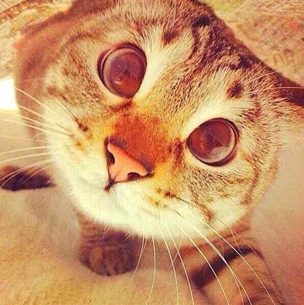 Фото кошки на аву стим - 767