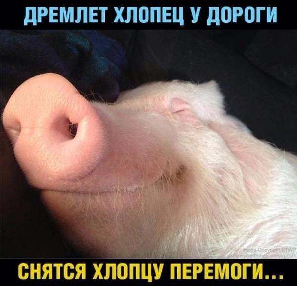 http://cs625116.vk.me/v625116631/2684d/fhMW8QIOF8s.jpg