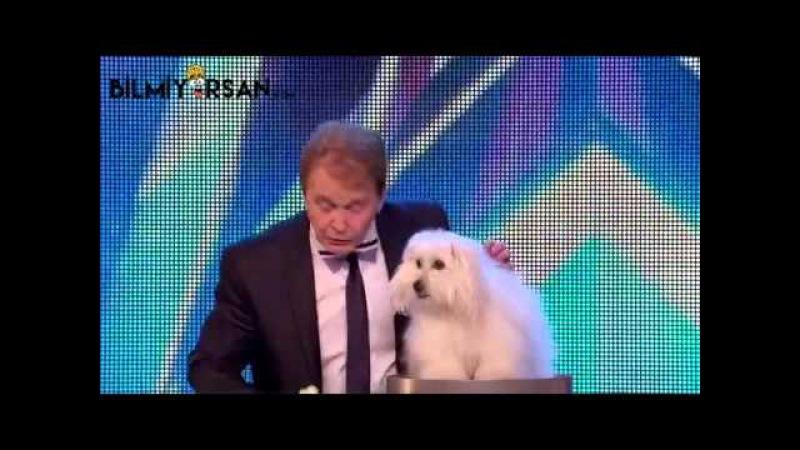 Yetenek Programına Çıkan Konuşan Köpek Şaşkına Çevirdi - Bilmiyorsan.com