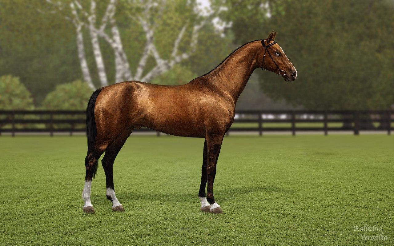Регистрация лошадей в RHF 2 N_iDOLAIhGM