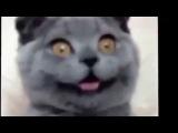 Смешные кошки.  Эти кошки  явно не в себе!