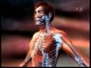 Чудо строения дыхательной системы