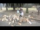 Нападение стаи кроликов на женщину. Япония.