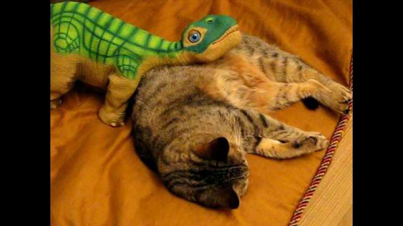 Pleo и котик