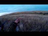 1.09.2015- охота на куропаток.