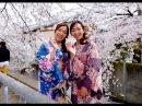Moments in Kyoto - Sakura | Real Beauty Cherry Blossoms Kyoto Japan 京都の桜 着物美人と夜桜 京都観光