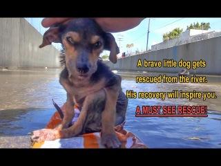 Чудесное спасение собаки