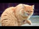 Самые Ржачные Кошки, Коты Чихают, Мило