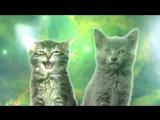 Space_Cats_Magic_Fly(поющие коты)
