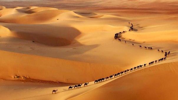Караван в пустыне, Саудовская Аравия