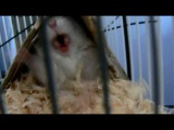 the attack of angry hamster