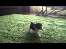 Копия видео Вероника Голд Блэк Берри 1 месяц