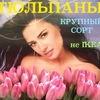 Цветы ТЮЛЬПАНЫ РОЗА к 14 феваля и 8 марта ОМСК