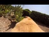 Любите ли вы так море, как эта собака?