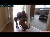 Приколы с животными №87   Собаки, которые давно не видели своего хозяина  Смешные животные  Animal v