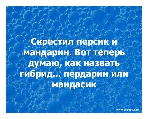 Сергей Вильчевский   Радошковичи