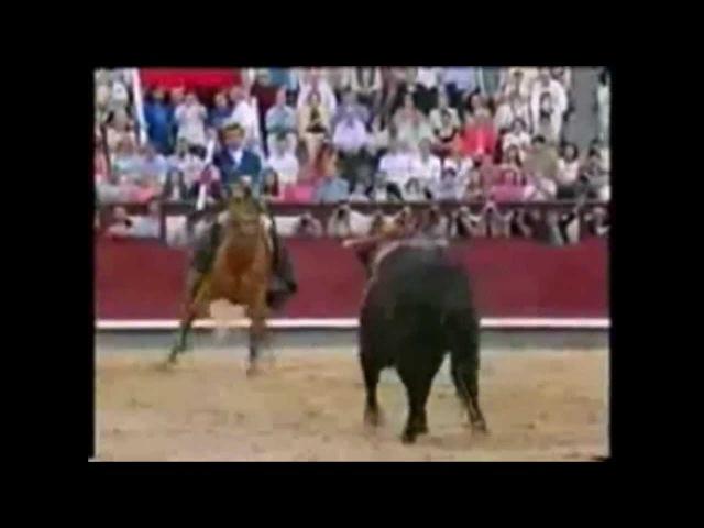 Лошади! Что делает эта лошадь? Вау! Лошадь vs бык